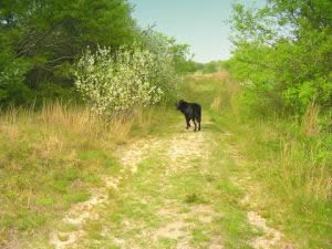 Cape Cod Pet Friendly Rental :: Conservation area walking trails